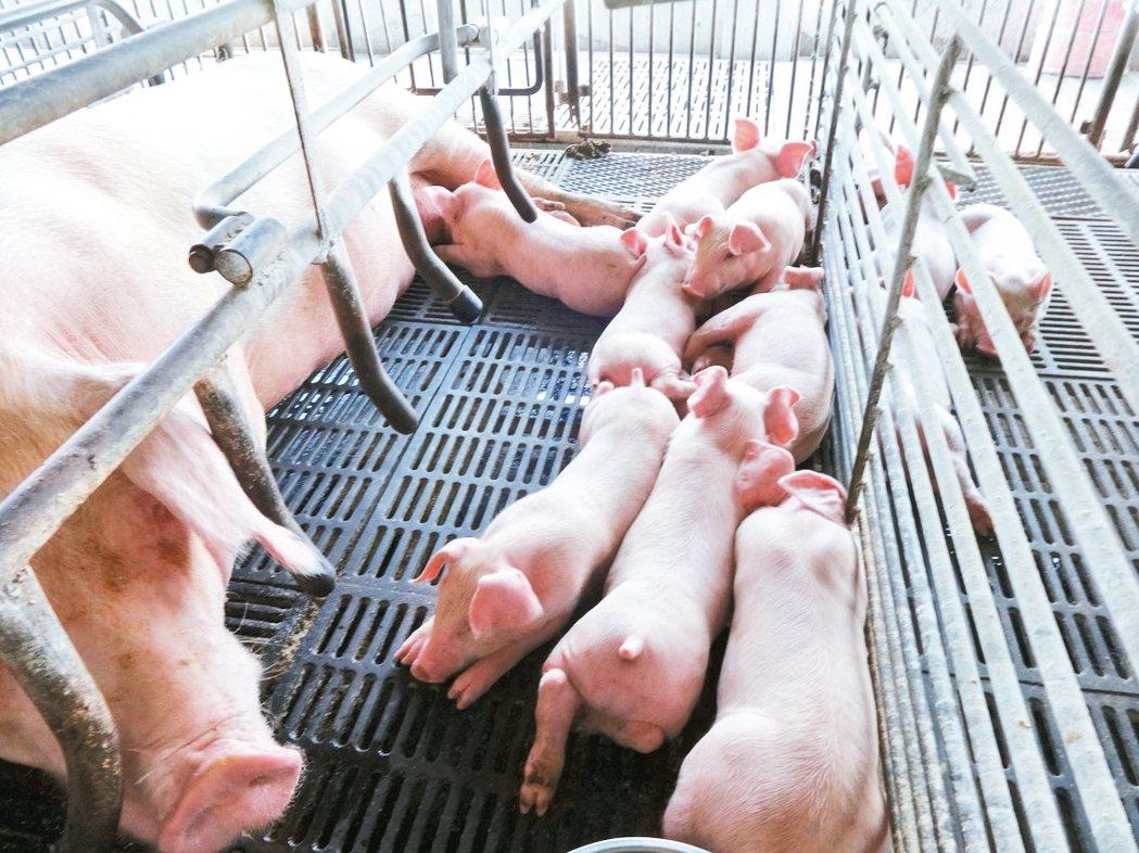 高雄市有養豬場及養牛場550場,已通過23場畜牧場可施灌45.2公頃農田。 記者...