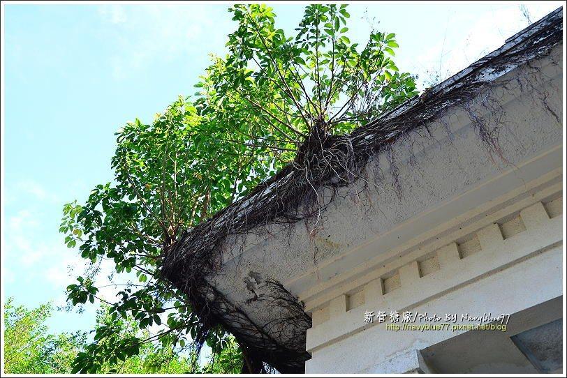 ↑塑膠工廠辦公室正門上的屋簷長出了多棵榕樹,一直沒人管就會變成樹屋。