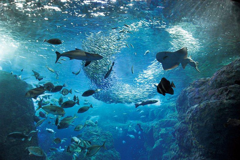 讓人宛如置身海底世界的巨大水族箱內可以看到種類豐富的魚群。