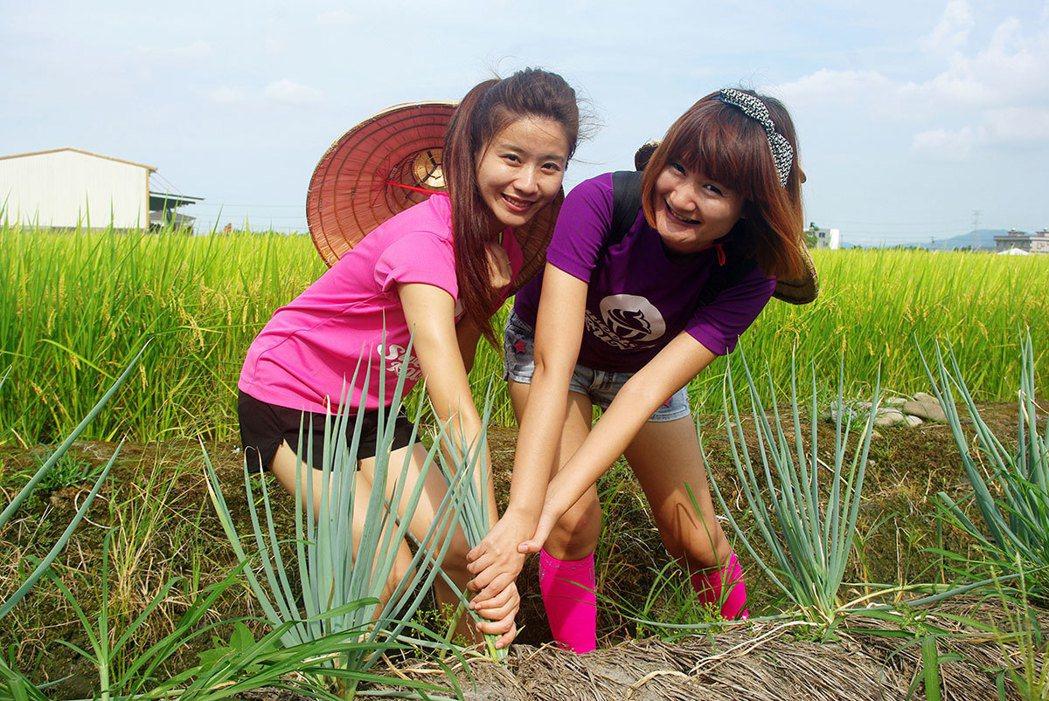 上將蔥體驗農場帶遊客體驗「偷挽蔥,嫁好尪」的樂趣。