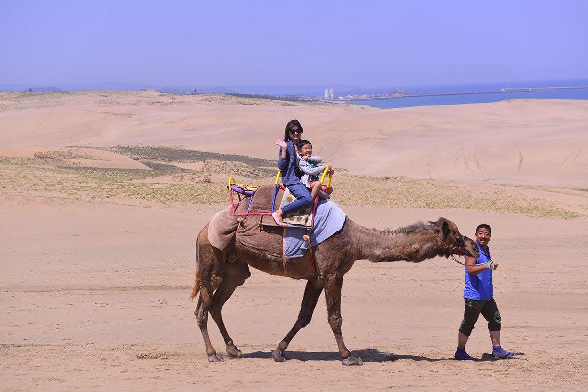 鳥取砂丘駱駝體驗,大人小孩可以一起乘坐。