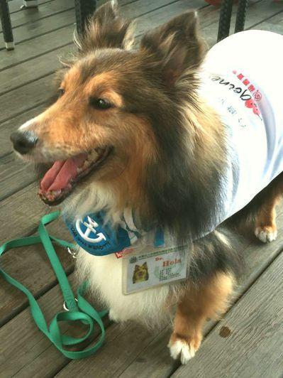 進行動物輔助治療的治療犬,都經過許多訓練。 圖/台灣狗醫生協會提供