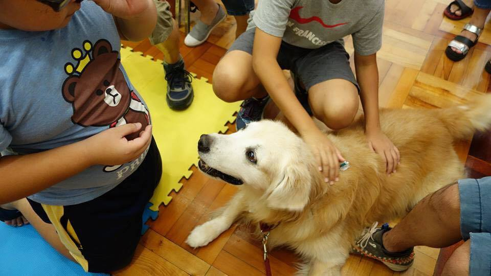 台灣狗醫生協會推動動物輔助治療多年,訓練許多治療犬。 圖/台灣狗醫生協會提供