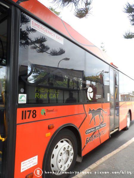 CAT免費巴士。