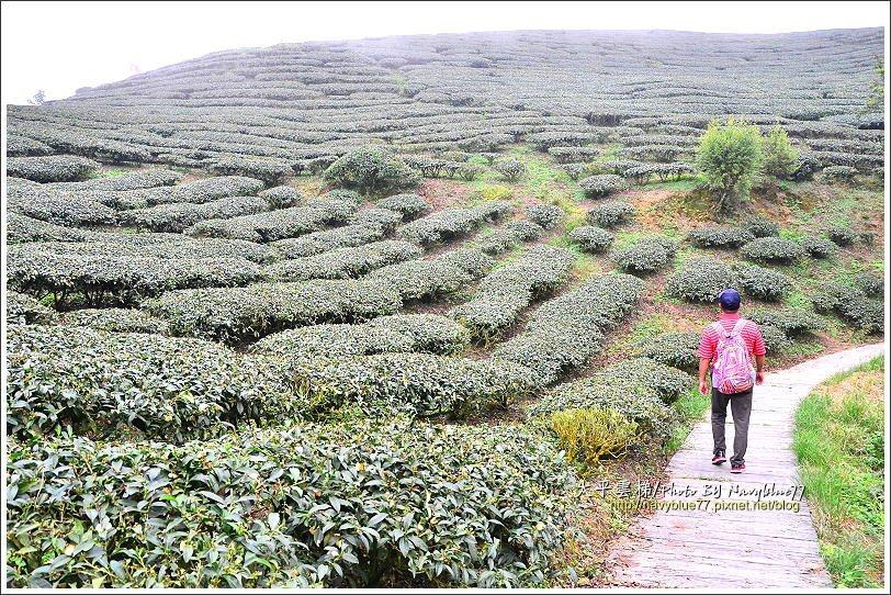 ↑步道繞著龜山山腰而行,龜山是太平重要的茶區。