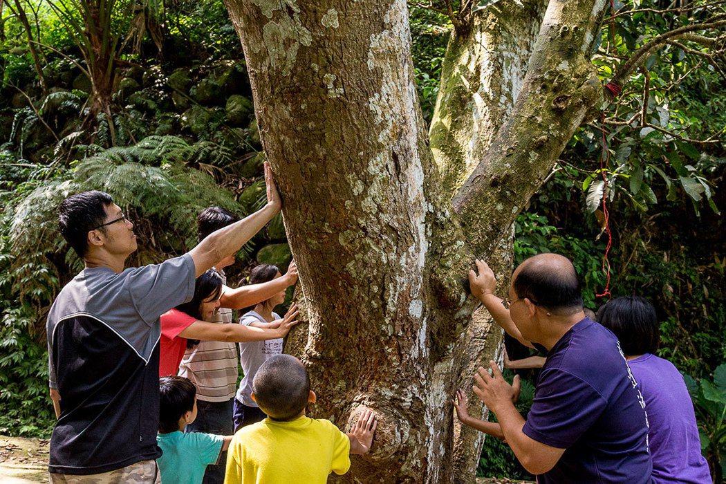 攀樹前要進行圍樹祈福,表達崇敬自然的心意。