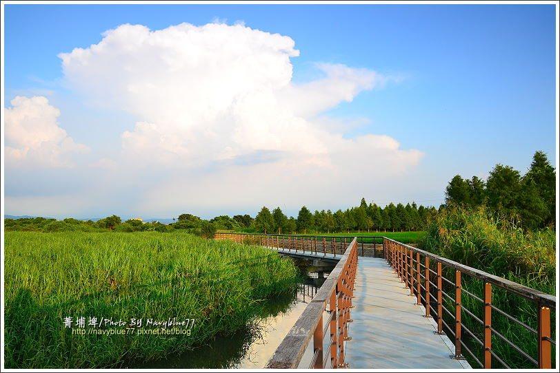 ↑繼續向東走,埤塘後段變成沼澤區。