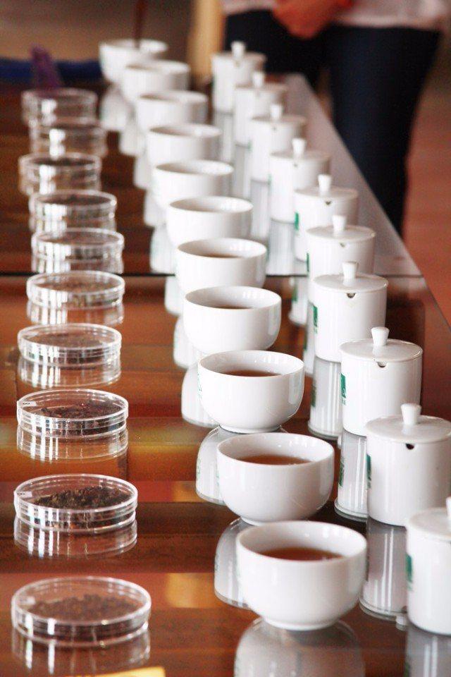 比賽茶席體驗。(攝影/陳德偉)