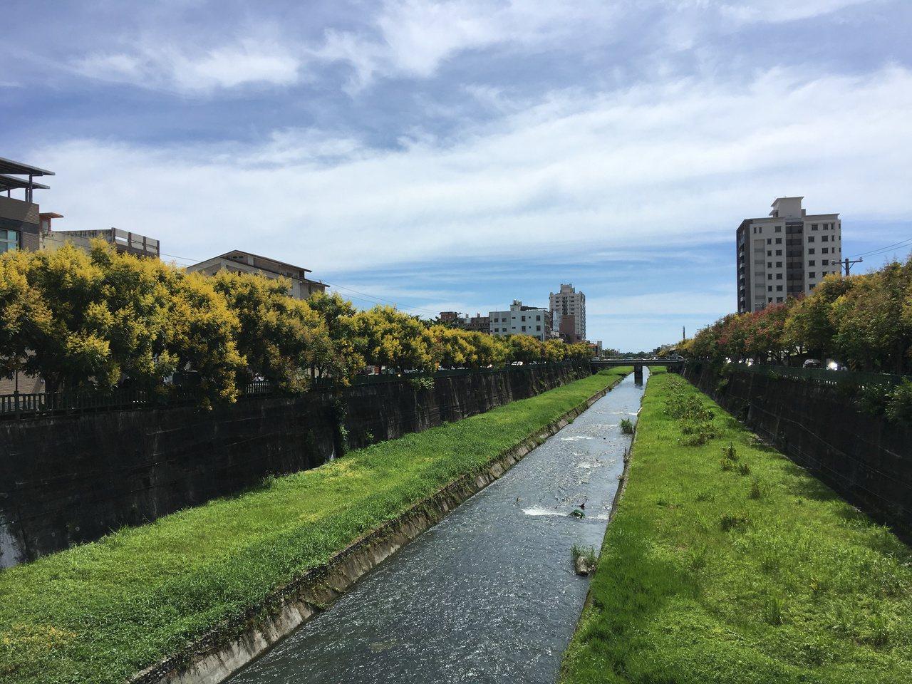 七腳川溪的兩側,台灣欒樹開滿黃色花、暗紅色果實的欒樹。記者徐庭揚/攝影