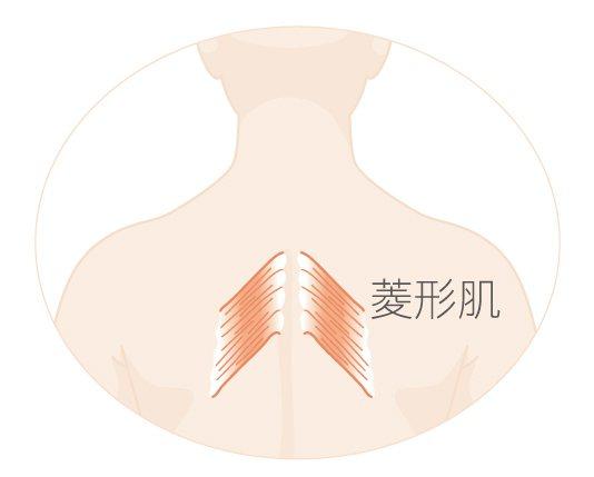 舒展圓肩,放鬆僵硬的背部肌肉(菱形肌)。 圖╱摘自采實文化出版《釋放疼痛的5分鐘...