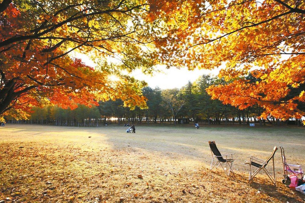 南怡島也是賞楓名地。 圖/韓國觀光公社提供