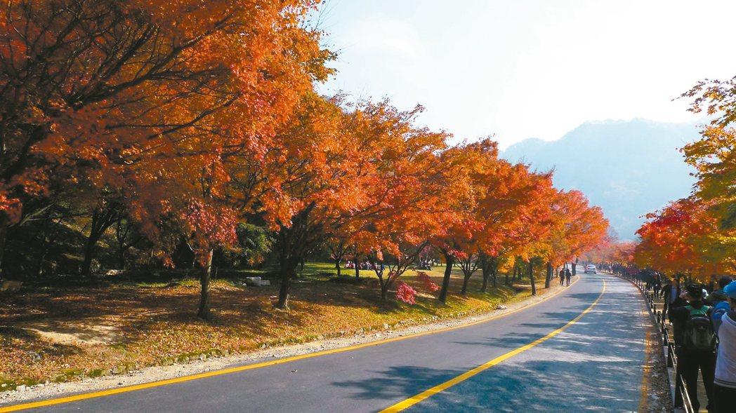 旅遊團必訪的內藏山楓景。 圖/韓國觀光公社提供