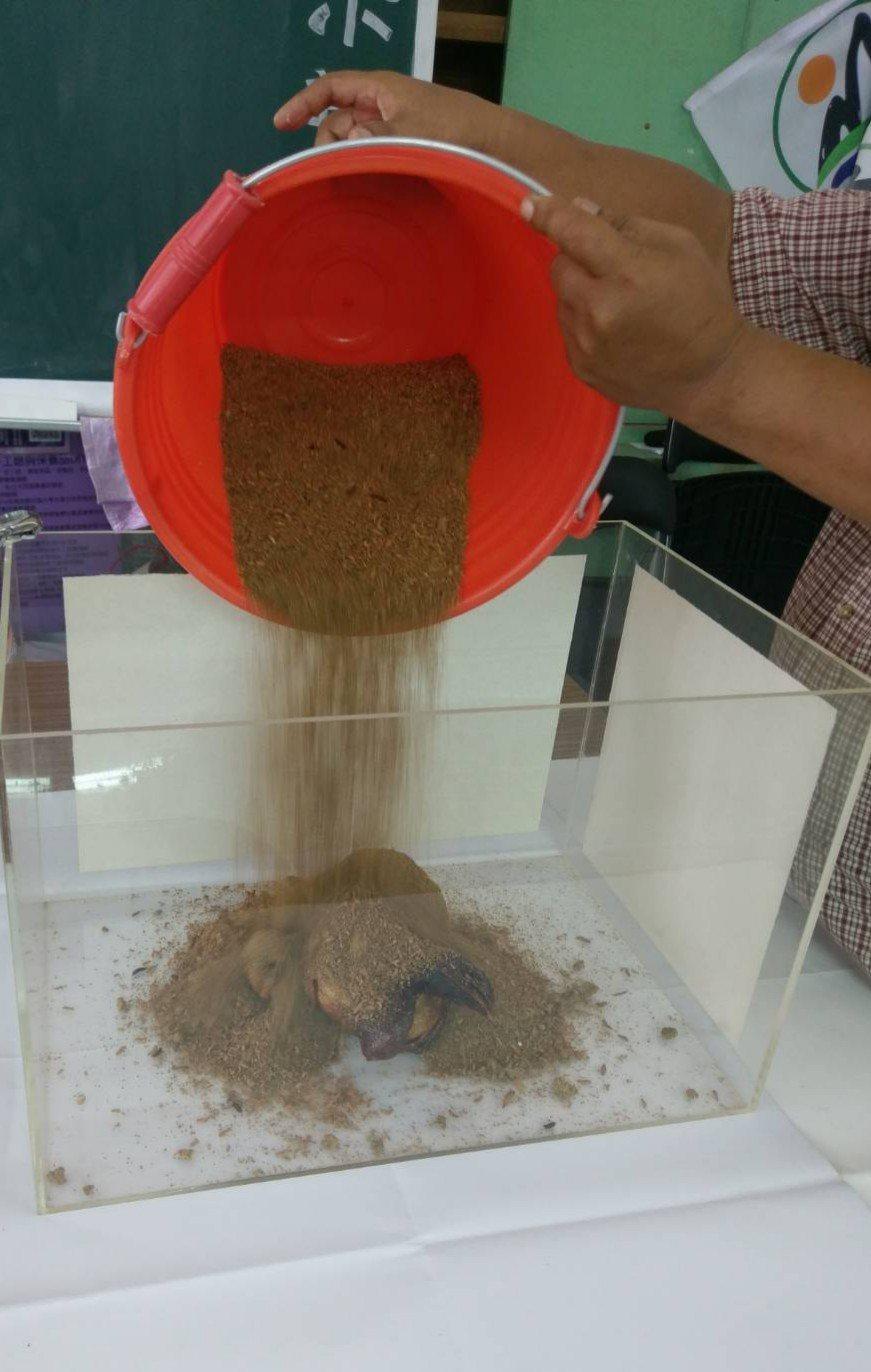 黑水虻倒入放烤雞的養殖箱,5到8小時可完全處理分解。圖/吳孟昆提供