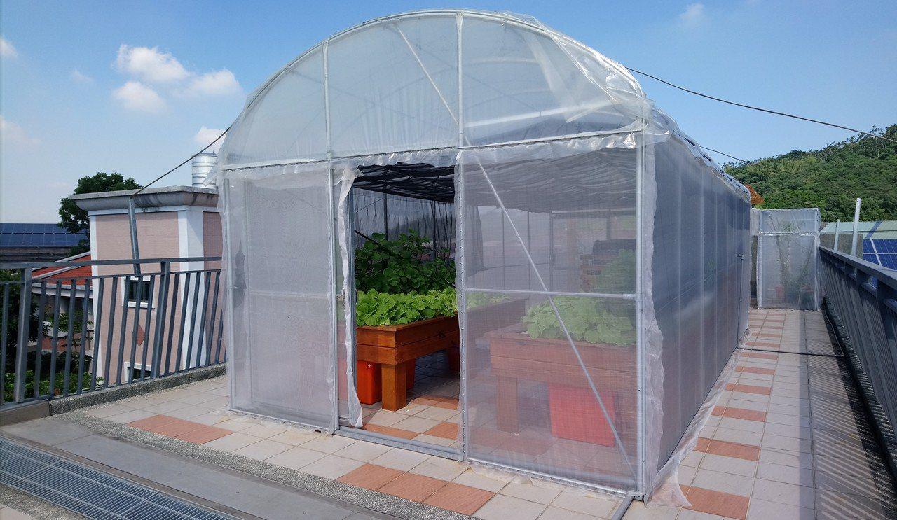 民和國小在頂樓建置「黑水虻魚菜共生」空中教學農園。記者卜敏正/攝影