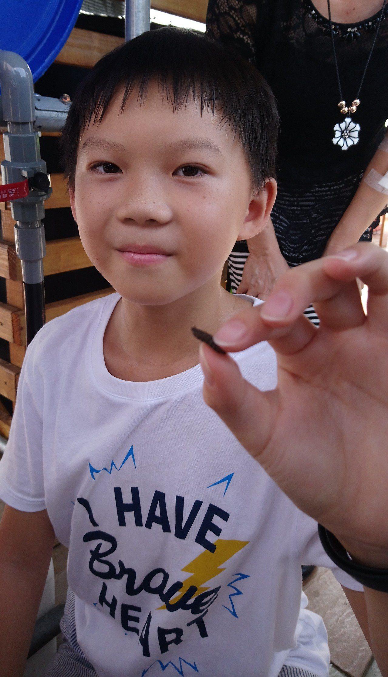 民和國小學童抓起黑水虻, 直言牠是廚餘好幫手。記者卜敏正/攝影