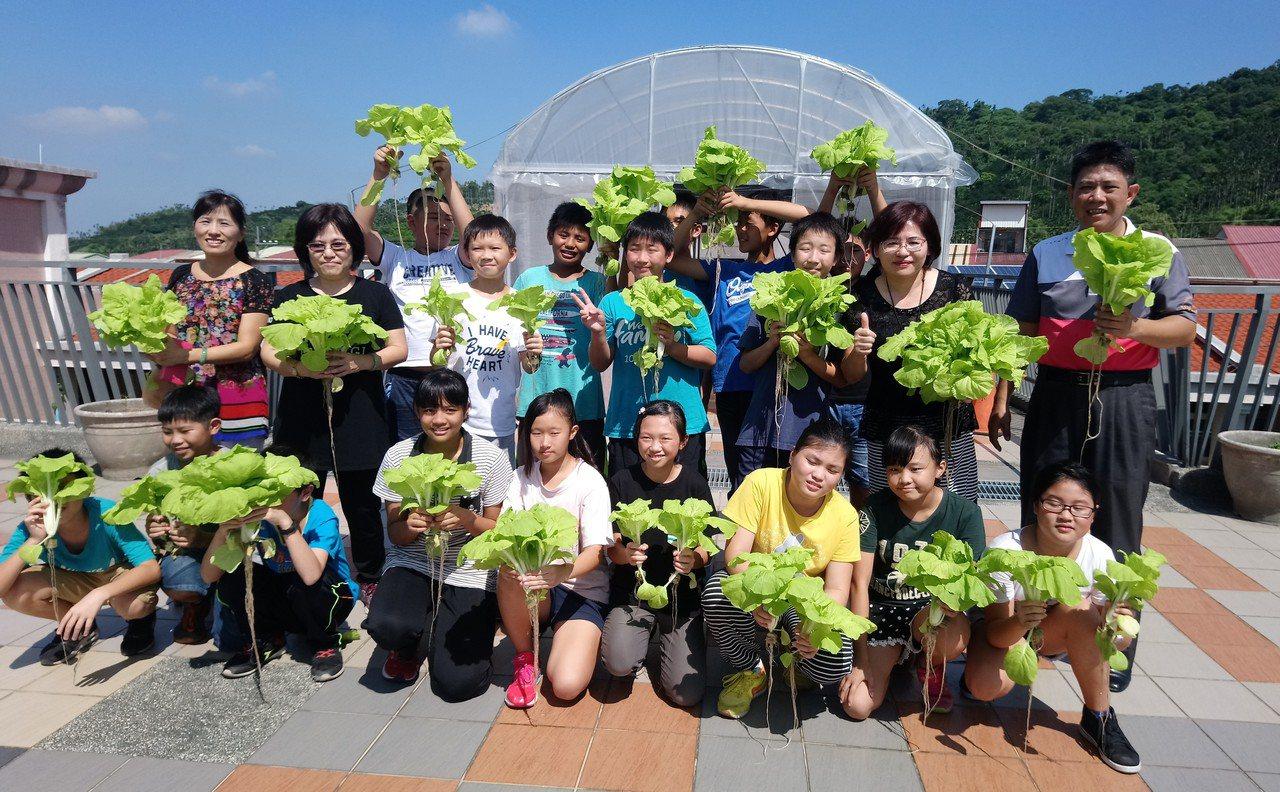 民和國小師生今天採摘黑水虻魚菜共生,所種植的水耕蔬菜。記者卜敏正/攝影
