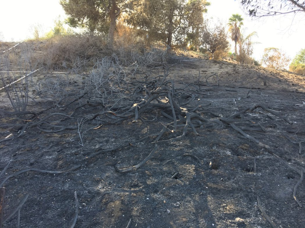 安那罕岡山火最近處逼近社區民宅近百呎,有的已經逼近居民後院。圖為山火過後一片焦土...