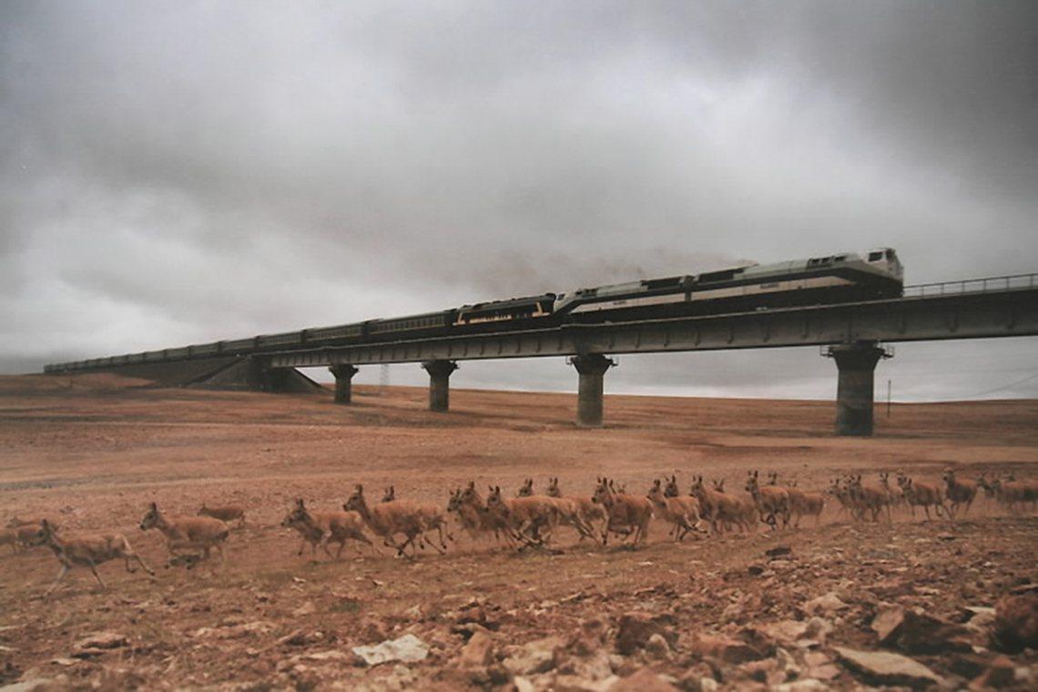 可可西里的申遺成功,也是今年UNESCO認證爭議之一。 圖/新華社