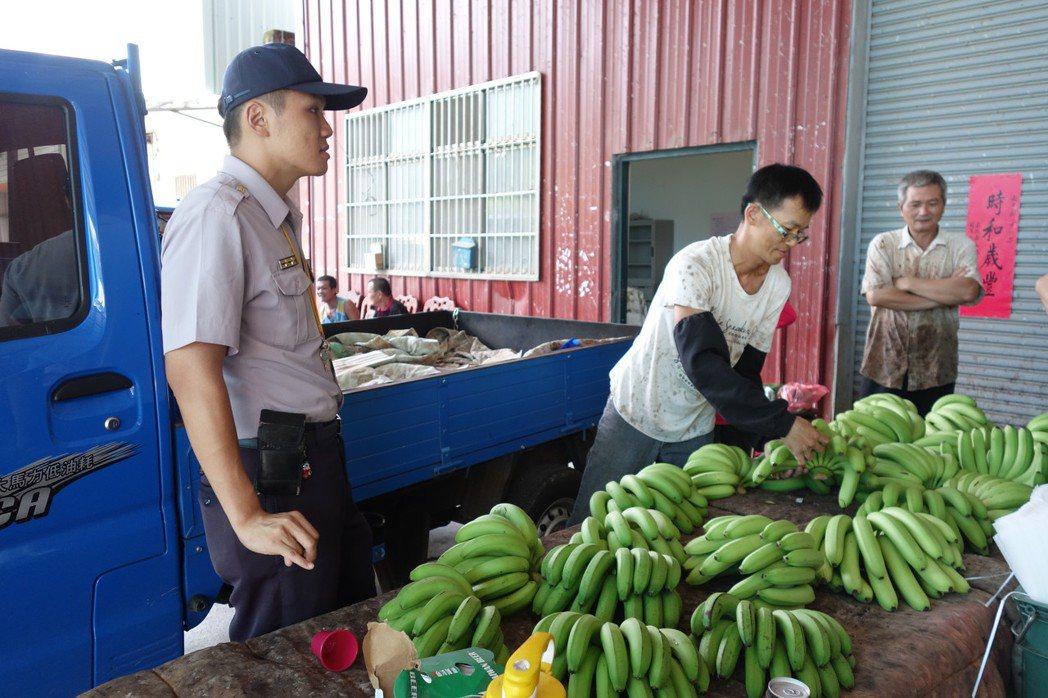 國內香蕉生產過剩,蕉價崩盤已逾3個月仍未見起色,蕉農批「政府裝睡叫不醒」。圖/報...