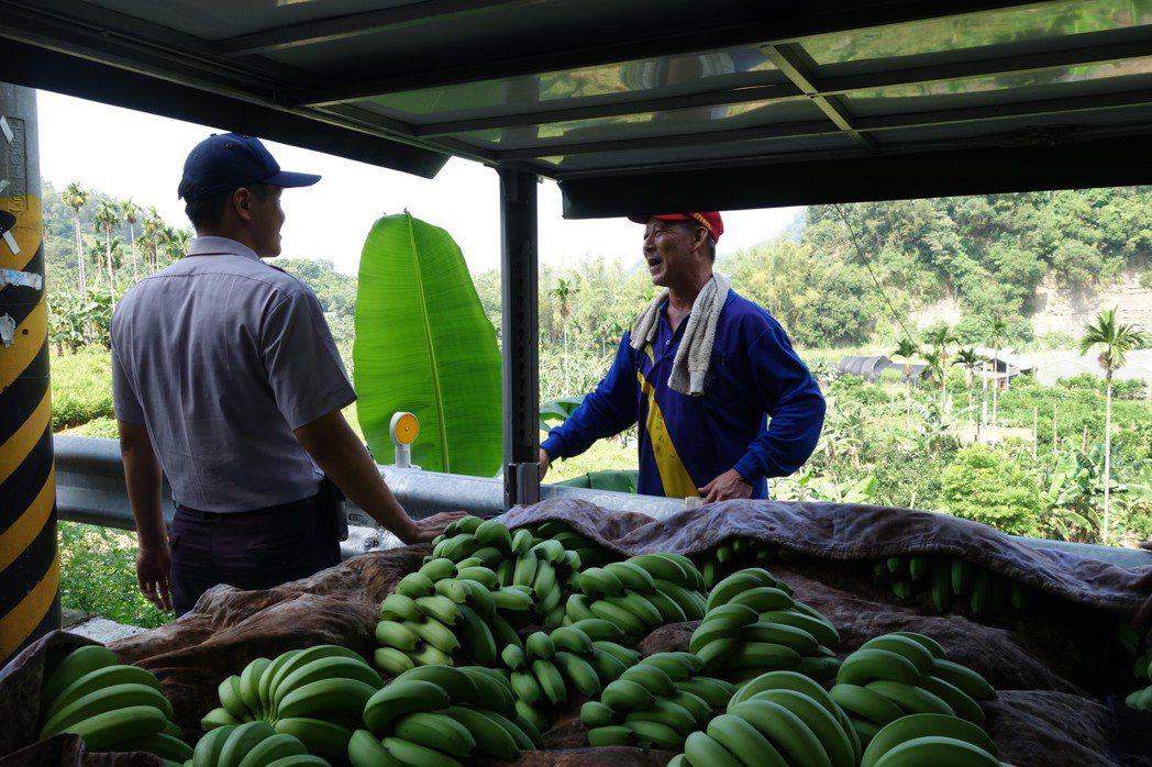 去年颱風肆虐,蕉價飆破每公斤百元,反觀今年因生產過剩,蕉價跌谷底,次級蕉每公斤1...