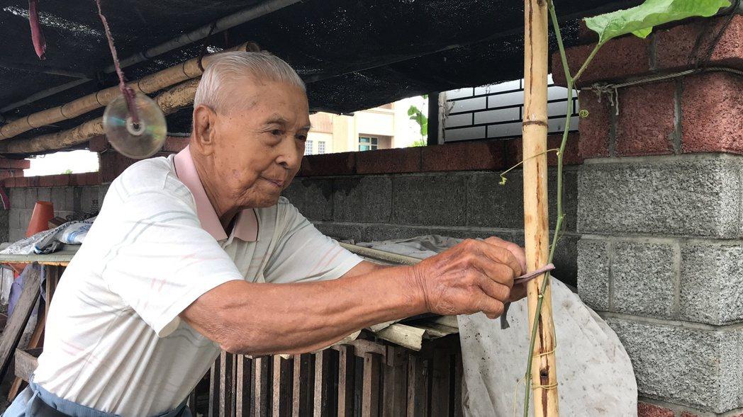 百歲人瑞溫炳龍平時下田「巡田水」外,還親自為百香果棚架綁上棉繩。記者陳妍霖/攝影