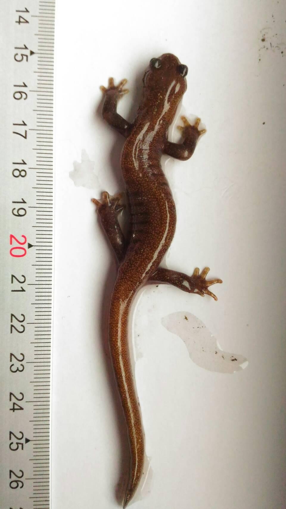 中央氣象局晚間指出,今天早上5時玉山氣象站,在站房內地板上方發現台灣瀕臨絕種保育...