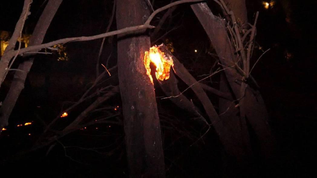 森林火警持續蔓延,附近的樹木都被跳躍的火星波及。記者蔡家蓁/攝影