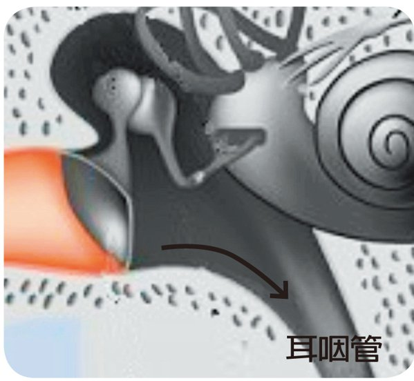 耳咽管(圖二)正常人的中耳腔內,耳膜下方並無凹窩,中耳腔內的分泌物可順勢排入...