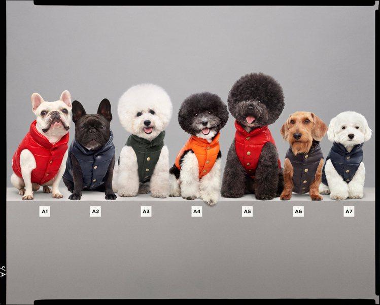 寵物犬特別系列羽絨背心共推出5款顏色。圖/MONCLER提供