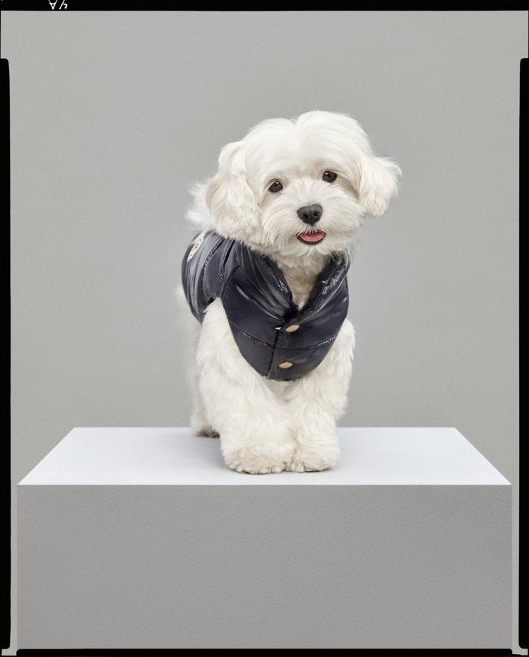 寵物犬特別系列藍色亮面羽絨背心,價格未定。圖/MONCLER提供