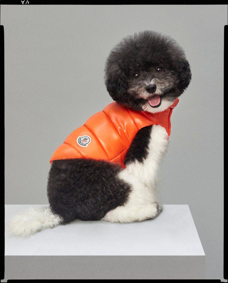 寵物犬特別系列橘色亮面羽絨背心,價格未定。圖/MONCLER提供