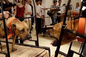 龍緣之/虐待動物有何藝術價值?——談古根漢美術館撤展爭議