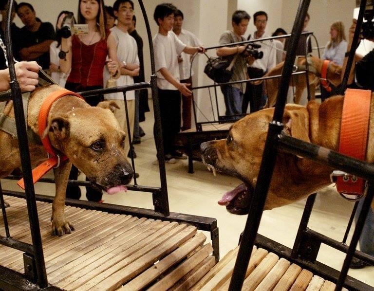 孫原和彭禹的《犬勿近》作品,因涉及動物虐待遭民眾抗議後撤展。 圖/取自change.org