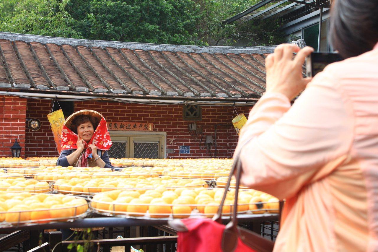 柿餅季來臨,曬柿餅的畫面吸引不少民眾前來攝影,一片黃澄澄美景,成為美麗風景。圖/...
