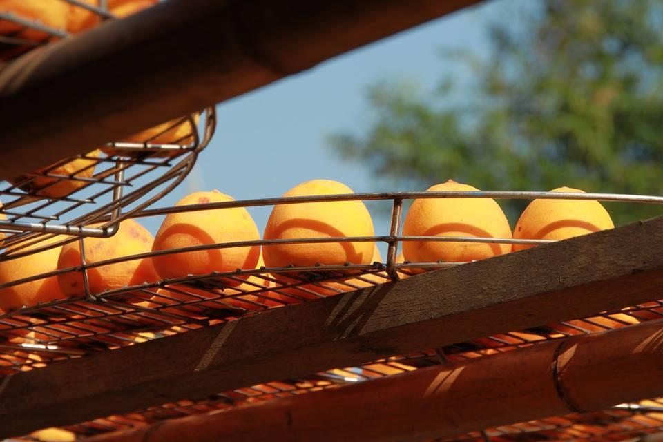 業者現今忙曬柿餅,一片黃澄澄美景,成為美麗風景。圖/本報資料畫面、記者郭政芬/攝...