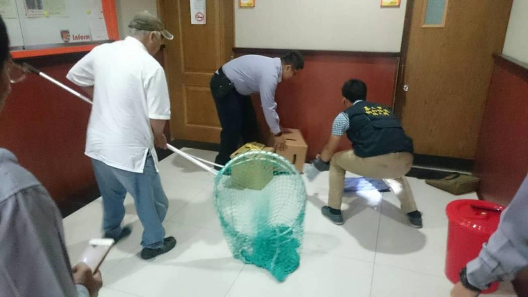 台灣獼猴逃出紙箱,在安樂派出所內逃竄,警方動員齊力「抓猴」。記者曾健祐/翻攝