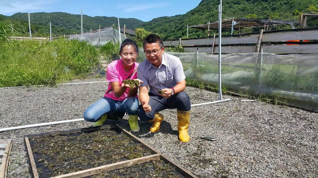 丁采綸(左)從台灣頭遷到台灣尾開雨來菇生態農場,響應友善環境的有機栽植,農糧署南...
