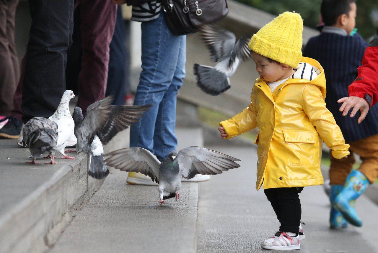 國父紀念館廣場上,孩童餵食野鴿。本報資料照/林俊良攝影