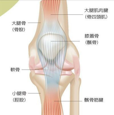 廖珮涵、蘇韋豪/繪圖