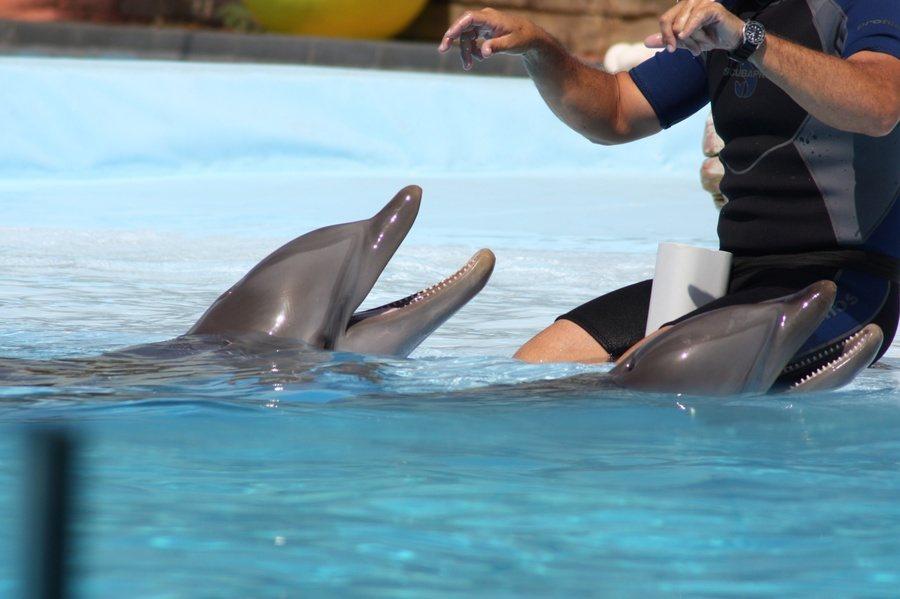 鯨豚動物不僅屬於群體動物,彼此也會像人類一樣照顧其他鯨豚的幼子。(Photo b...