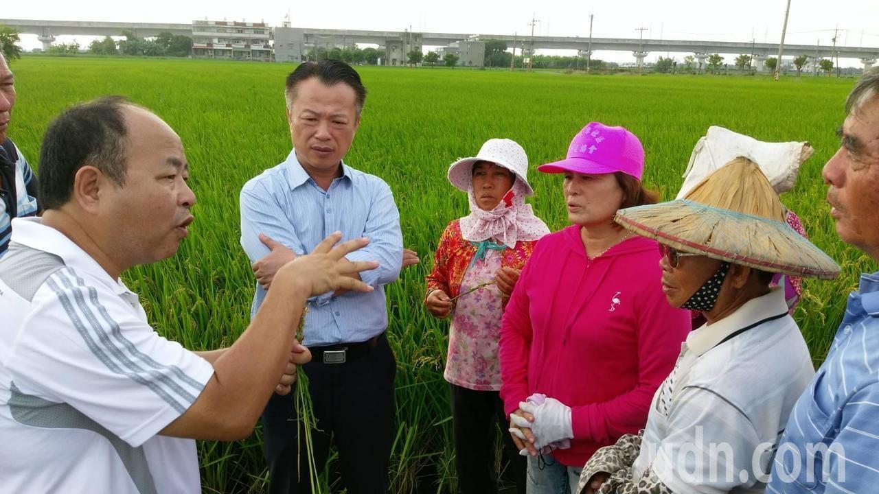 請辭農委會副主委的翁章梁(中)昨天還返鄉勘查水稻病害。記者魯永明/攝影
