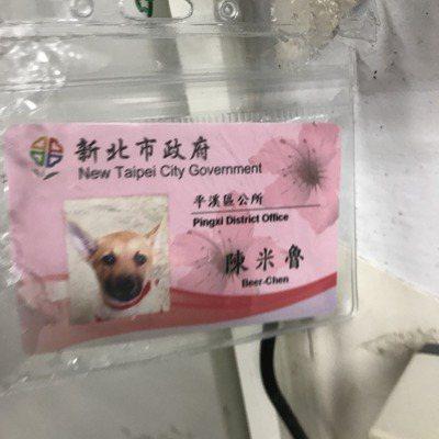 平溪區公所從動物之家認養了流浪犬「陳米魯」,還替牠製作市府員工識別証。 記者陳珮...