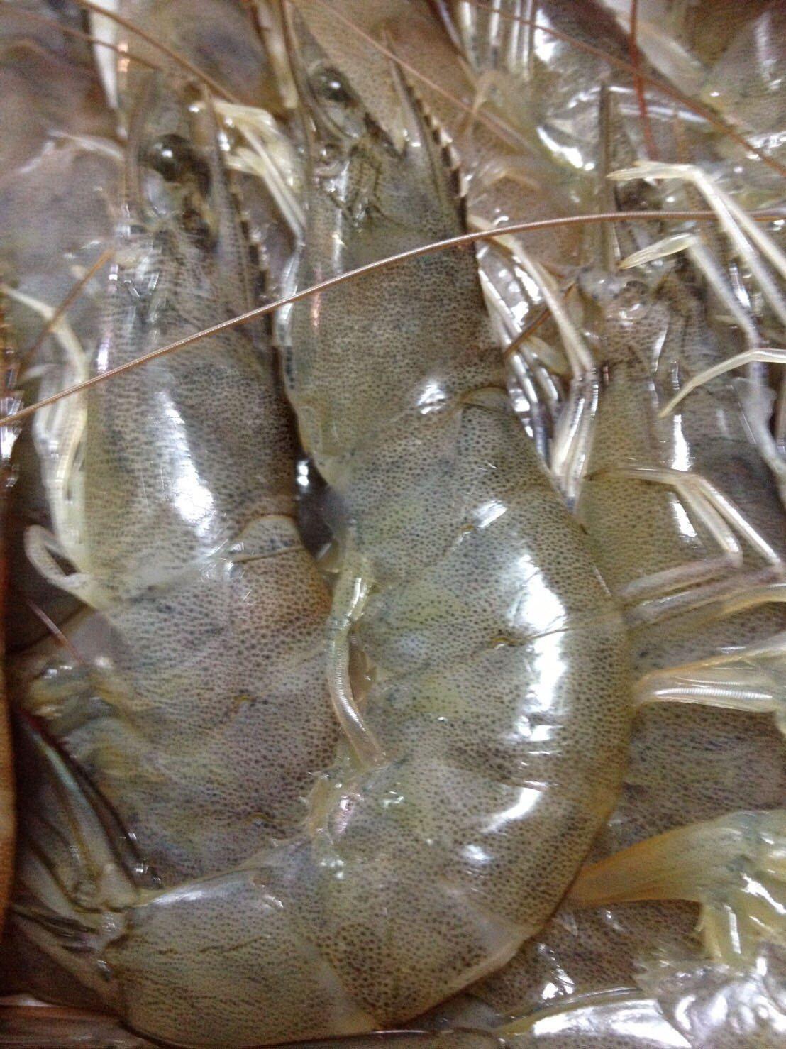海育所開發的nin-rax負離子高溶氧養殖系統,可讓每噸水可養殖收成8公斤白蝦,...