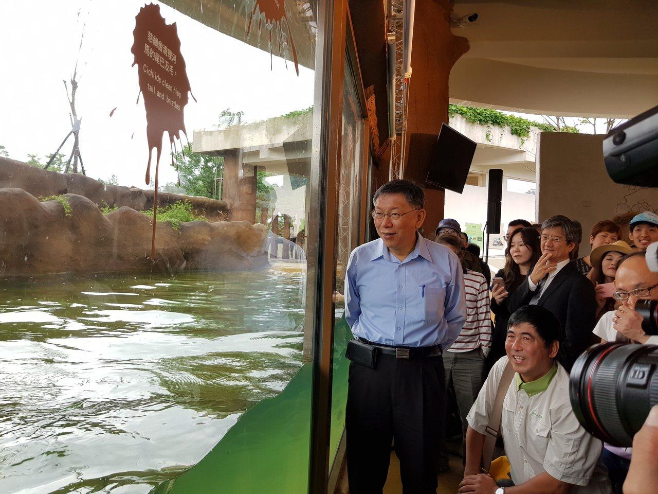 台北市長柯文哲為河馬浴場揭幕,體驗近距離觀察河馬。記者翁浩然/攝影