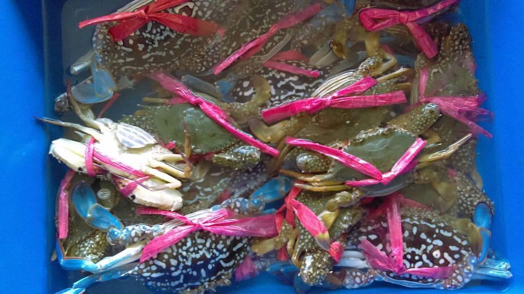 秋風起,嘉義縣沿海東石鄉秋蟹肥美,漁民捕撈數量少,東石魚市場拍賣會每天下午湧入承...