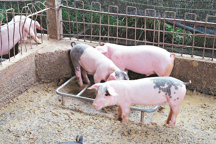 豬是日本腦炎病毒的主要宿主,台東李姓男子成為日本腦炎確診病例,是台東縣7年來首例...