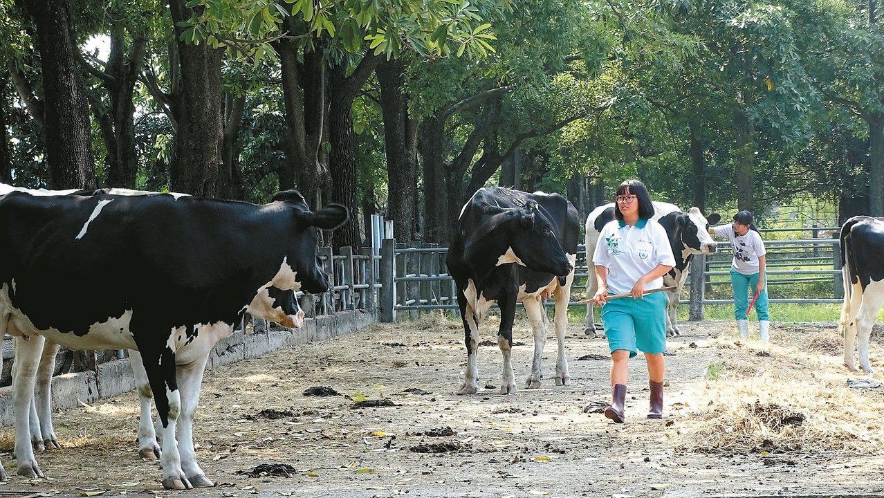 國立員林農工校園有實驗農場,每天生產保證安全衛生又香醇的鮮乳,每天生產的鮮乳,上...
