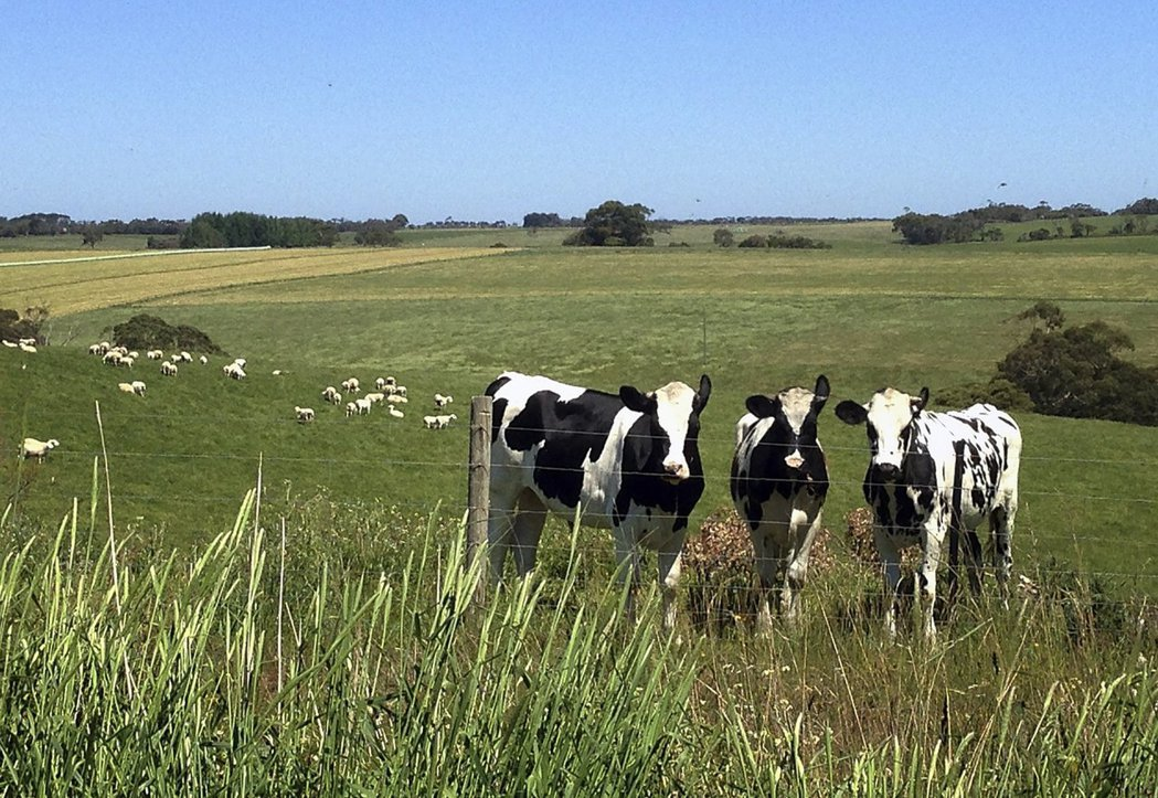 中國投資人大舉投資澳洲農牧業,主因看準大陸消費者瘋買「澳洲製」產品。(圖/路透)
