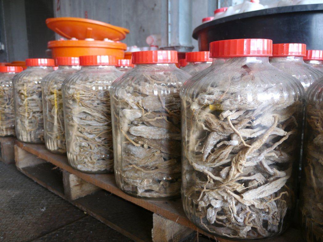 美濃白玉蘿蔔種植面積一度暴增至300公頃,當時農會啟動收購,將30萬台斤蘿蔔加鹽...