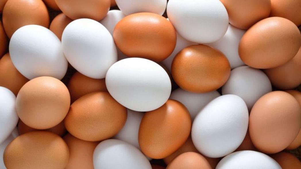 最新研究吃雞蛋的好處多多,對手機族來說也有預防黃斑部病變的優點。圖/安南醫院提供